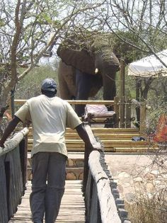 Mfubu Lodge and Gallery (Grietjie Nature Reserve, South Africa) - UPDATED Lodge Reviews - TripAdvisor Kruger National Park, National Parks, Nature Reserve, Hotel Reviews, Great Deals, Candid, South Africa, Trip Advisor, Gallery