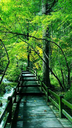 The virgin forest of Jiuzhaigou