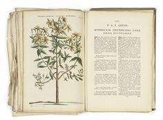 Jan Commelin (1629-1692) and Caspar Commelin (1667-1731) <br />107 Botanical Studies, from Horti medici Amstelodamensis rariorum plantarum historia<br />handcoloured engravings, published Amsterdam 1697-1707, most very loosely bound, with descriptive text of plates<br />S. 16 x 10¼in. (40.5 x 26cm.) <br />106 unframed<br />1 framed (3)<br />