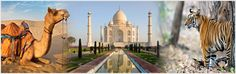 Golden triangle with Ranthambore covers the three cities of Jaipur, Agra and Delhi with a slight stress to the famous National Park in Ranthanbore near Jaipur. Book this tour here http://tinyurl.com/o8afeku