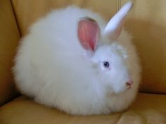 Commend Companies for Stopping Use of Angora Rabbit Fur - ForceChange
