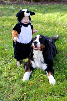 Halloween Bernese Mountain Dog costume