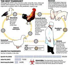How Risky is Bird Flu Virus and Future Strains? Influenza Virus, Bird Flu Virus, Natural News, Health Research, Diet And Nutrition, Anatomy, Pose