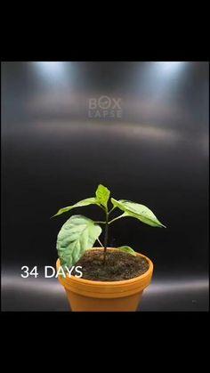 Indoor Garden, Garden Plants, Indoor Plants, House Plants, Outdoor Gardens, Growing Vegetables, Growing Plants, Aquaponique Diy, Container Gardening