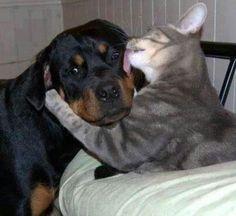 Amigos para sempre...