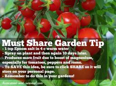 Must Share Garden Tip: Produce more fruit by boosting Magnesium.
