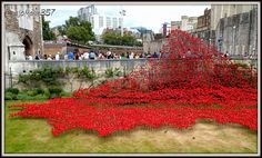 Cascade of ceramic poppies at the Tower of London to mark 100 years since the start of WWI - can't wait for my turn to plant the poppies!