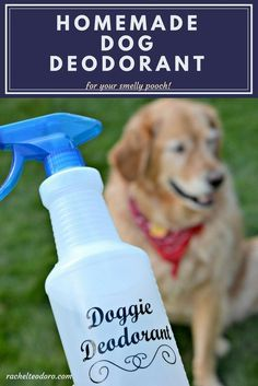 Homemade Dog Deodorant For Your Smelly Pooch Dog Smells Stinky