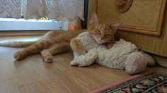 she loves sleeping all day ❤ #cat #mycat #Giselle #sleep #cute #animal #gato