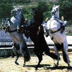 Menorquina, Caballos en Menorca fiesta de S.Joan Spain