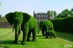 Cool Garden Topiary - Elephants, Flowers, Pigs, Peacock, Lion, Race Cars + More