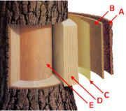 deciduous forest layers diagram singer sewing machine threading tree parts - printable www.exploringnature.org | homeschool botany pinterest ...