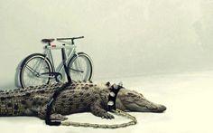 Don't steal my bike/ Croc Bike Lock. Bikes Direct, Bicycle Lock, Bike News, Cycling Motivation, Bike Photo, Airedale Terrier, Terriers, Bike Accessories, Picture Design
