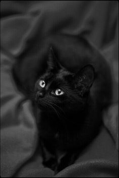 Black cat. Cute cats 75 - Click on the picture for more cute cats n pets information n photos