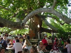 木の下カフェ - Google 検索