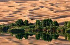 Image result for desert oasis images