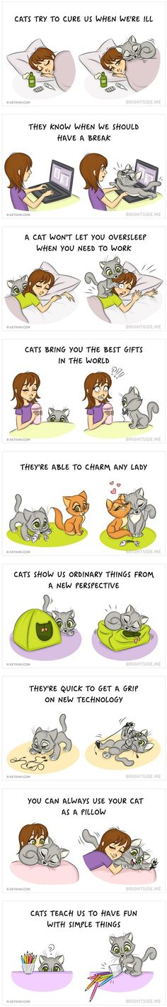 How its like living with a cat - Imgur