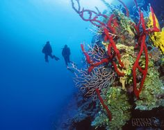 Camen Islands dream vacation!