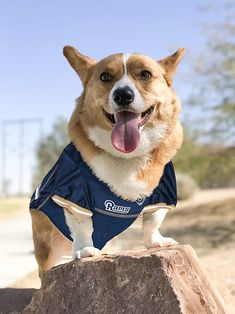 aa9647d4b44 Buy Cute Small Pet Dog Clothes T Shirt Shirts Apparel Coat size S NFL  Broncos at online store