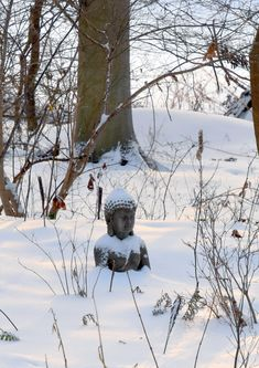 End of the Year at Carla's - FineGardening Cinnamon Fern, Maple Valley, Fine Gardening, Snowy Day, Winter Beauty, Hydrangea Flower, Garden Photos, Winter Garden, Shade Garden