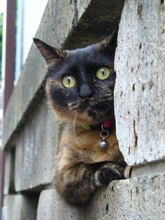 """A cat sitting on the wall waiting to be stroked brightened up an otherwise dreary walk to work."" --Author Unknown"
