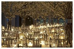 Charity Ball idea: for fire and ice theme, lighting could be used to give the blossoms a red/orange hue