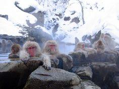 Jigokudani Monkey Park, Japan   Phil Keoghan's 23 Destinations You Have To See Before You Die