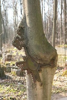 A weathered-cross grave marker has broken and fused with a tree. Smolensk cemetery of St. Petersburg, Russia