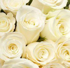 white rose!!!