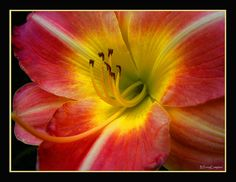 Tiger Lilly Flower by bterrycompton, via Flickr