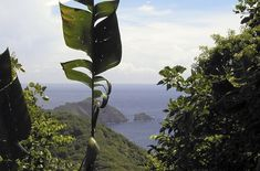 Tobago Rainforest Reserve, Trinidad & Tobago : Nine Secret Caribbean Attractions - SmarterTravel.com