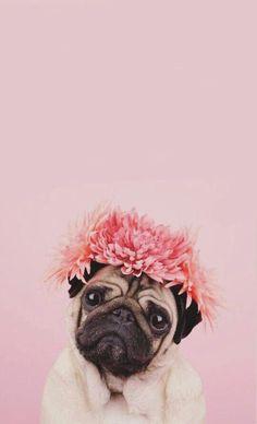 tiktok duvar kad 17 Pictures Confirming That Pugs Love Pink Color Cute Dog Wallpaper, Dog Wallpaper Iphone, Tier Wallpaper, Animal Wallpaper, Puppies Wallpaper, Beautiful Wallpaper, Iphone Backgrounds, Screen Wallpaper, Wallpaper Backgrounds