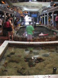 Key West, FL Aquarium. Learned what conk looked like AFTER I ate it-Yuck!