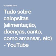 Tudo sobre calopsitas (alimentação, doenças, canto, como amansar, etc) - YouTube