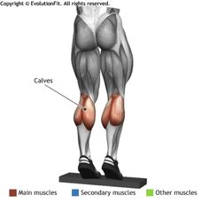 CALVES - STANDING BARBELL CALF RAISE