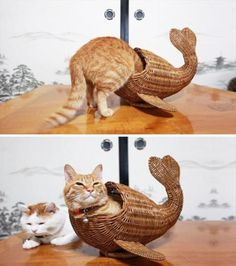 Cute Or Funny - Cats Pretending to be different Animals  Cat as Whale