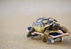 Turtle on a scateboard