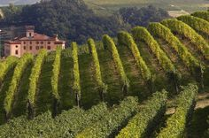 Book your adventure -  Among wine cellars and famous vineyards of Langhe and Roero, come and taste the most famous Piedmontese wines: Barolo, Barbaresco, Nebbiolo, Roero, Barbera, Dolcetto and Arneis.  Specially selected wine producers will enable you to taste flavors and specialties of the Piedmontese tradition. Choose between a half day or a full day tour:  Half Day Wine Tour (5 hours)   Barolo village tour, tasting a glass