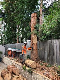 We providing Tree Removal Robina, Tree Removal Tallebudgera, Arborist Tweed Heads, Tree Lopping Burleigh Heads in Gold Coast, Australia Tree Lopping, Gold Coast Australia, Tree Pruning, Firewood, How To Remove, Trees, Woodburning, Tree Structure, Wood