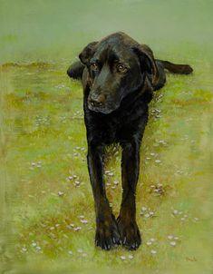 Tucker, oil on panel, 11 x 14.  The very cute dog that won my pet portrait raffle benefitting the SPCA of Sullivan County NY.