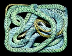 one from a series of snakes by Guido Mocafico