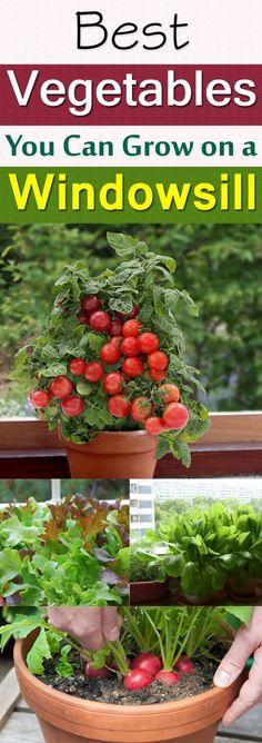 Windowsill Vegetable Gardening | 11 Best Vegetables To Grow On Windowsill