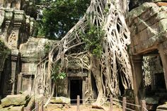 **Ta Prohm (tomb raider temple, overgrown with trees) - Siem Reap
