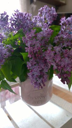 lilac Lilac, Dreams, Plants, Lilac Bushes, Lilacs, Planters, Plant, Syringa Vulgaris, Planting