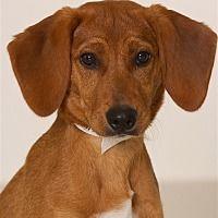 Pet Card Pets Kitten Adoption Dog Adoption