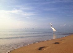 White morph blue heron says hello from Fort Lauderdale beach.  Another beautiful summer morning image from @FtLauderdaleSun