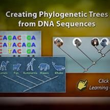 Creating Phylogenetic Trees from DNA Sequences | HHMI's BioInteractive