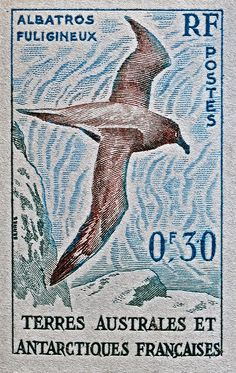 Tierras Australes y Antártica Francesa 1956 - El Albatros Tiznado es una especie de ave procelariforme de la familia Diomedeidae. Su distribución es circumpolar, y cría en islas subantárticas. Su población mundial se estima entre 19 000 y 24 000 parejas