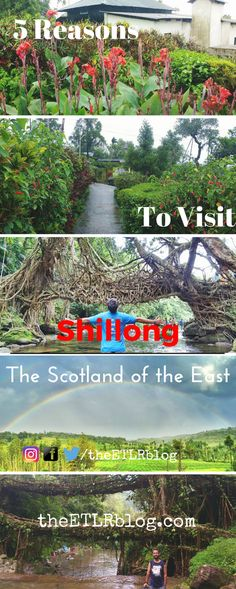 5 reasons Why You Should Pack Your Bags and Head out to Shillong Today !