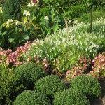 full sun garden- Full sun Plants & flowers